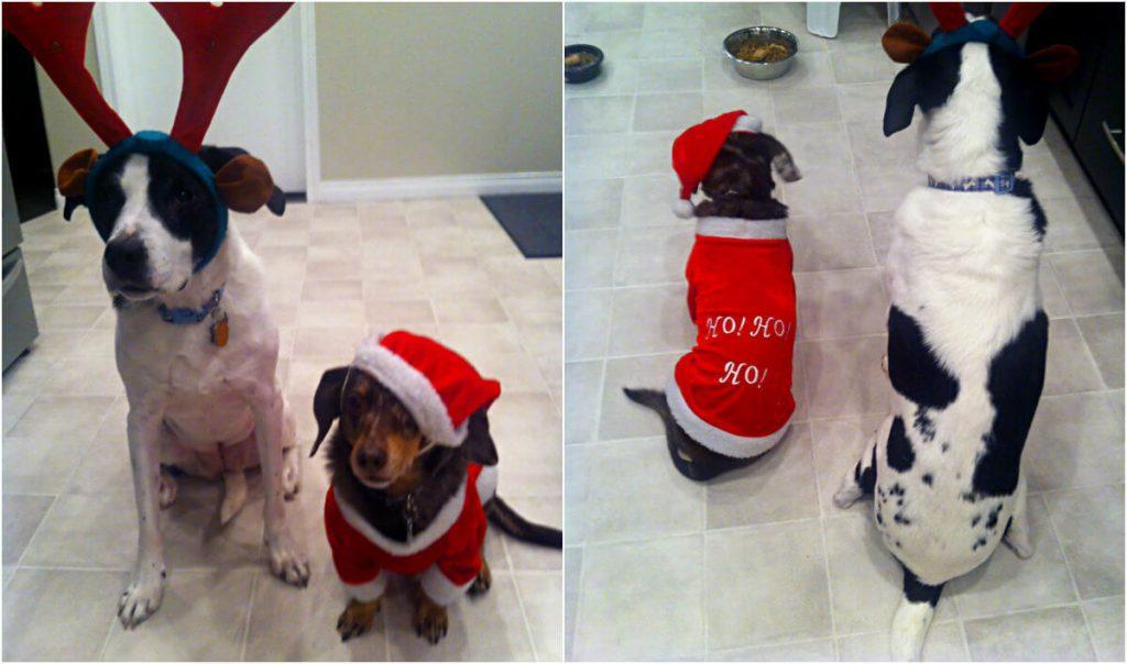 Christmas dogs, dachshund mix, dalmatian mix, best friends, winnipeg fashion blogger, style my dreams, dogs, family pets